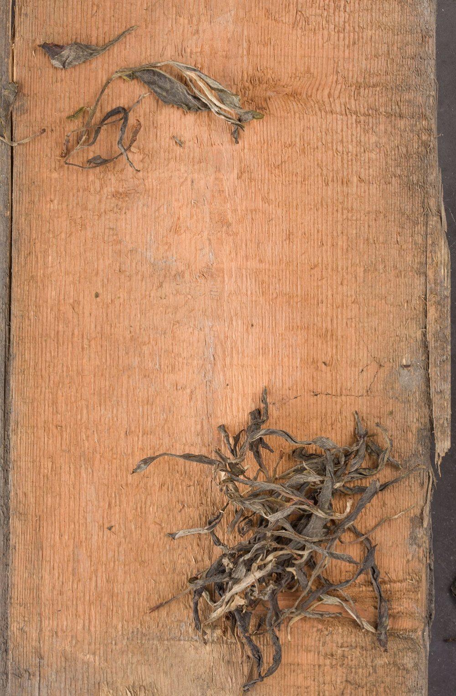 ancient tree Li, pu-erh thee, uit China